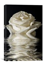 Rose Flood, Canvas Print