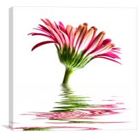 Pink Gerbera Flood 2, Canvas Print