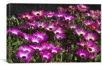 Purple Carpet, Canvas Print