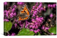 Small Tortoiseshell Butterfly, Canvas Print