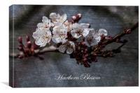 Hawthorn Blossom Textures, Canvas Print