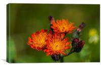 Fox And Cubs, Canvas Print