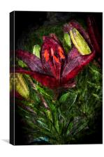 Red Lily 3, Canvas Print