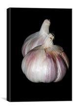 Garlic, Canvas Print
