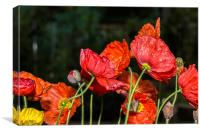 Poppy Drama, Canvas Print