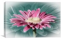 Pink Gerbera Dream, Canvas Print
