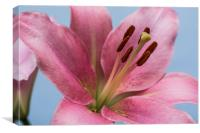 Pink Lily 9, Canvas Print