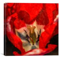 Red Tulip Texture, Canvas Print