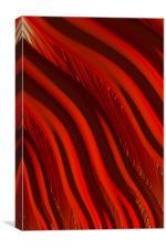 Lava Flow, Canvas Print