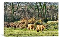 Highland Cows, Canvas Print