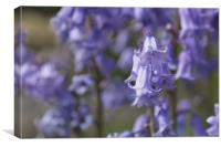The Bluebell Patch, Canvas Print