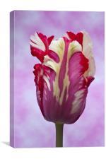 Tulip Estella Reinfeld, Canvas Print