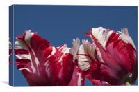 Tulips (Estella Reinfeld), Canvas Print