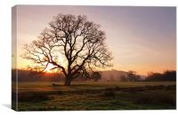Old Oak Sunrise. Bishops Tawnton, Canvas Print