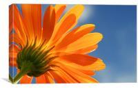 Orange and blue, Canvas Print