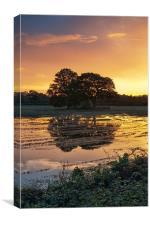 Sunset trees, Canvas Print