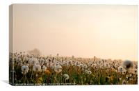 Dandelions in the mist, Canvas Print