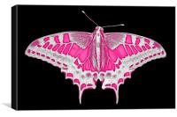 Pink Butterfly, Canvas Print