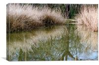 Reed bed reflection, Canvas Print