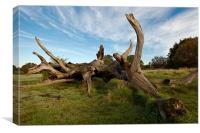 Breeched Oak, Canvas Print
