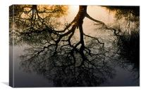 Tree reflection, Canvas Print