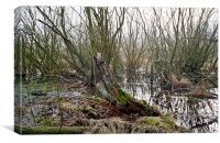 Forest swamp, Canvas Print