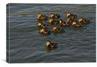 12 Ducklings, Canvas Print