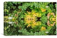 Giant Hog Weed, Canvas Print