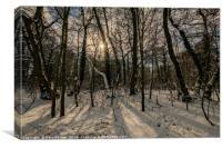 Woodland Snow, Canvas Print