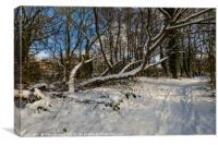 Snow covered Path, Canvas Print
