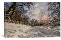 Ground Level Snow, Canvas Print