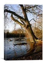 Oak on edge of lake, Canvas Print