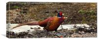 Fountains Abbey Pheasant, Canvas Print