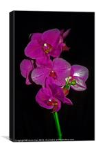 Purple Orchid, Canvas Print