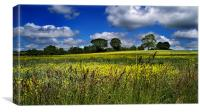 Yellow Field Scenery, Canvas Print