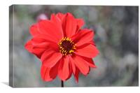 Lone Red Flower, Canvas Print
