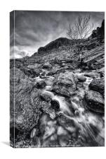 Mountain Stream, Canvas Print