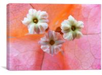 Sugar Button Flowers, Canvas Print