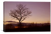 Tree Silhouettes at Sunset 2