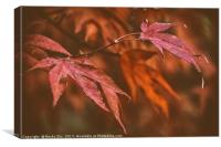 The Japanese Maple., Canvas Print