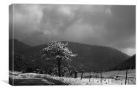 Lonely Snow Tree, Canvas Print