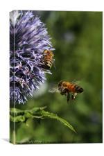 Bee In Flight, Canvas Print
