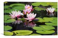 Reflected Water Lily, Canvas Print