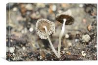 Mushroom Macros, Canvas Print