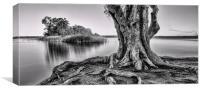 Old tree, Canvas Print