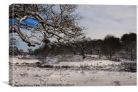 Winters day at Bradgate Park, Canvas Print