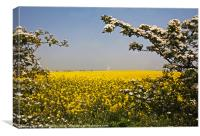 Rape Fields, Canvas Print