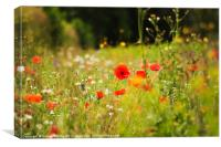 Summer Day in the Meadow, Canvas Print