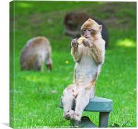 Excuse me while I enjoy my Lunch, Canvas Print