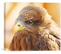 Yellow Billed Kite, Canvas Print